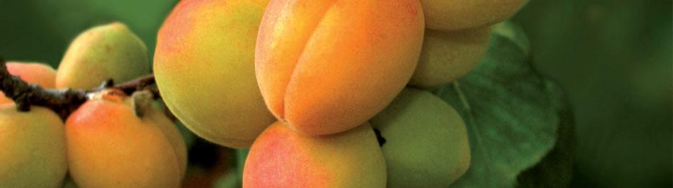 slider-fruit